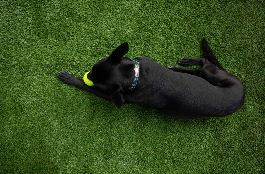 Artificial Turf Myth 6: All Play Pet Turf Rolls